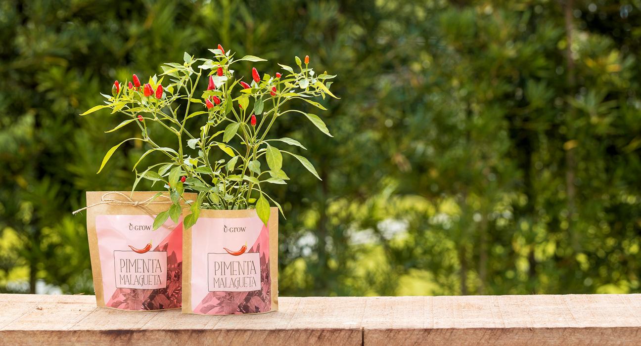 U grow uma semente 233 um presente 095design